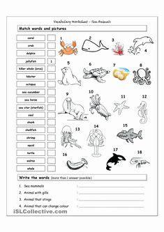 sea animal worksheet animal worksheets st grade