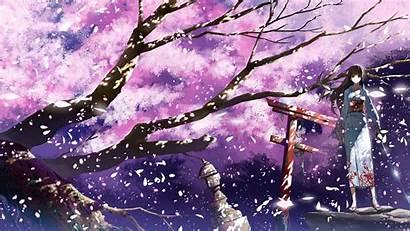 Blossom Cherry 4k Anime Blossoms Desktop Background