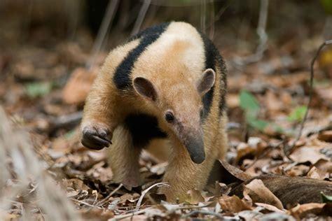 animal  starts   inspec wallp animals