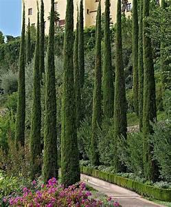 Eigentumswohnung Mit Garten Kaufen : italienische zypresse 39 totem 39 produktbild evergreen ~ Lizthompson.info Haus und Dekorationen