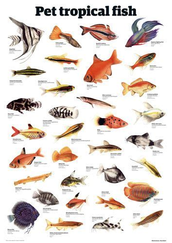 pet tropical fish  guardian wallchart afiches