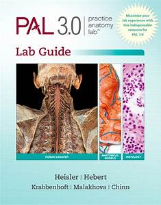 Practice Anatomy Lab 3 0 Lab Guide Solution Manaual