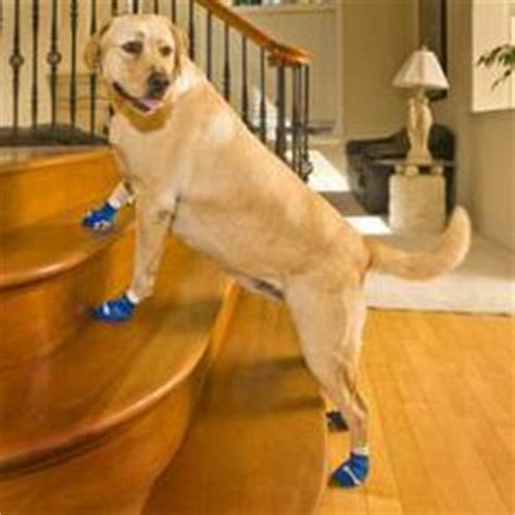 Socks Protect Hardwood Floors by 1000 Images About Dogs Boots And Socks On