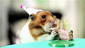 Happy Birthday Eating GIF - Find & Share on GIPHY