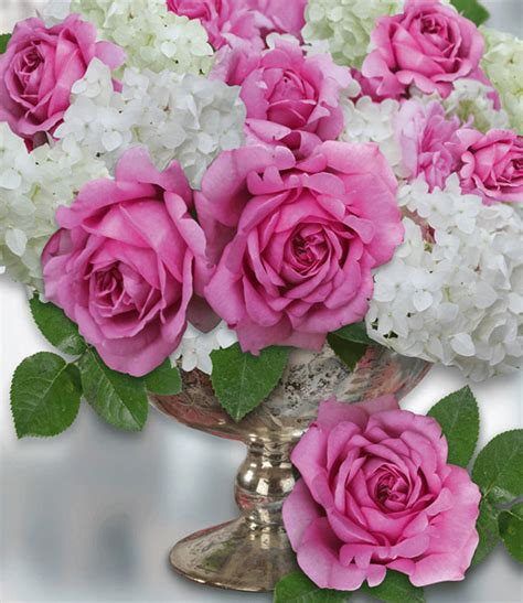 Rose D'amour Rose De Pompadour® Baldurgarten