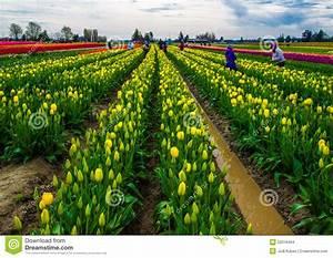 Farming Flowers Stock Photo - Image: 52018464