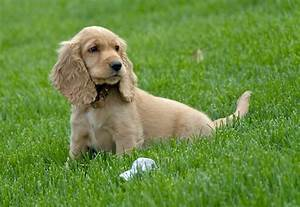 Puppy Dog Breeds Pictures