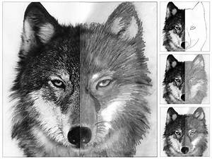 Drawing Of Wolf Face - DRAWING ART IDEAS