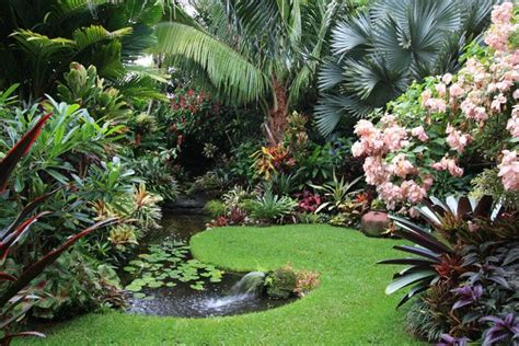 tropica garden dennis hundscheidt s garden never enough palms pinterest tropical gardens gardens and