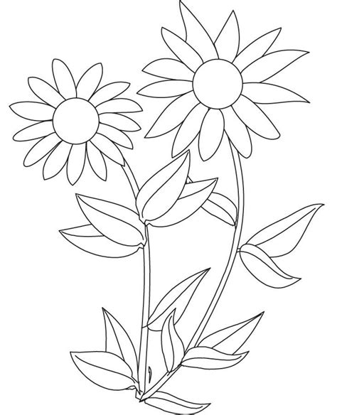 sunflower coloring page coloring home