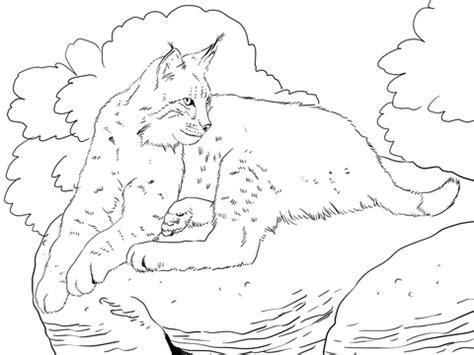 bobcat laying  coloring page supercoloringcom