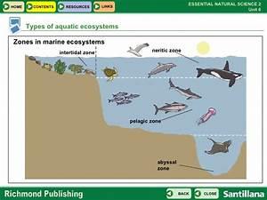 Marine Ecosystem Animals