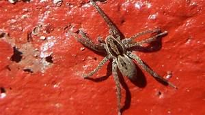 Faire Fuir Les Araignées : comment liminer les araign es c t maison ~ Melissatoandfro.com Idées de Décoration