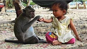 Strong Relationship Kid  U0026 Monkey   Lovely Friends Animals