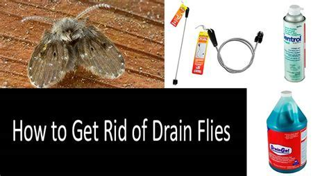 How to Get Rid of Drain (Sewer) Flies in 6 Steps: TOP 4