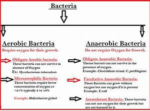 What are some examples of aerobic bacteria? - Quora