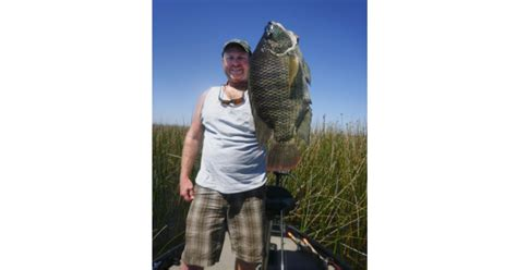 angler catches world record tilapia doesnt