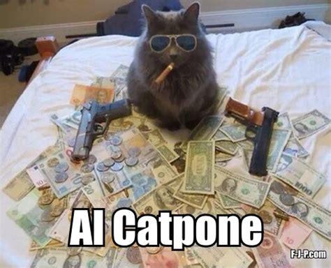 Funny Gangster Meme - al catpone cat gangster funny joke pictures