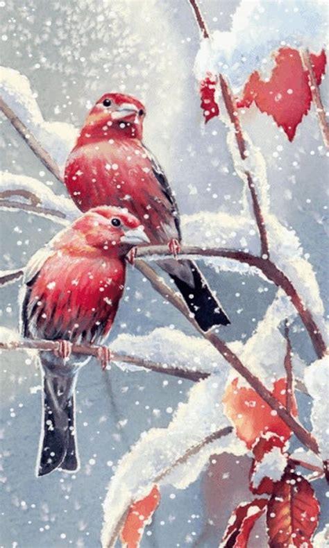 snow birds  wallpaper apk   android