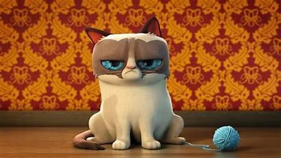 Cat Grumpy Cartoon Meme Funny 3d Wallpapers