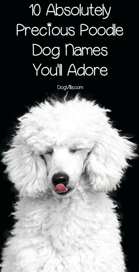 10 Absolutely Precious Poodle Dog Names Youll Adore