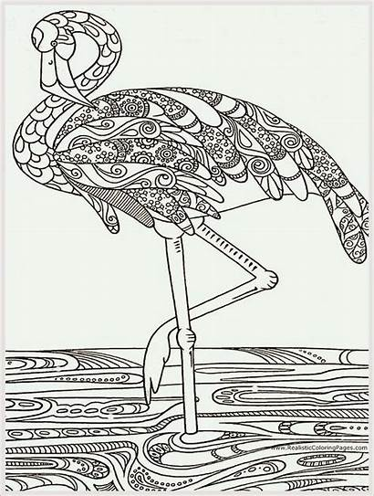 Coloring Adult Pages Bird Printable Heron Books