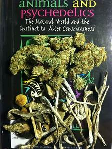 1648 best images about Weed on Pinterest | Smoke out, The ...