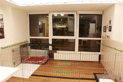 indoor kennel indoor dog kennel
