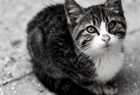 picture cat cute domestic cat animal pet