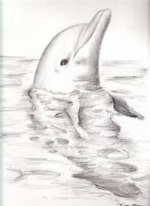 Dolphin drawing | Mermaids and The Sea | Pinterest ...