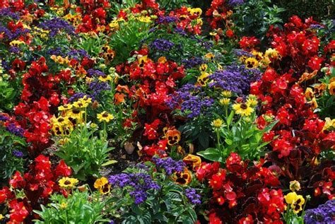 colorful garden beds  butchart gardens photo