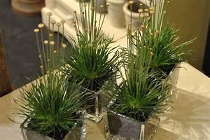 Plantes En Pot D U0026 39 Int U00e9rieur   Tentez L U0026 39 Originalit U00e9 Avec