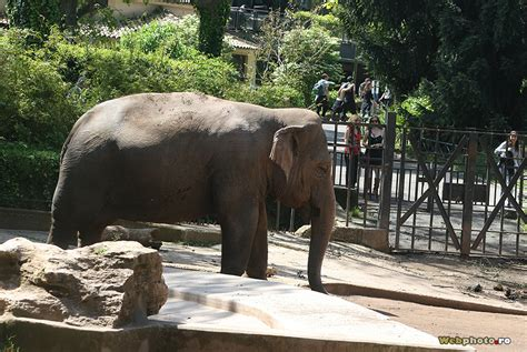zoo rome borghese safari villa experience ro webphoto roma