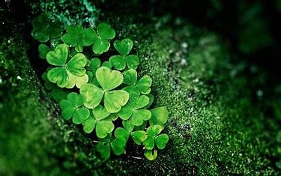 St Irish Background Shamrock Backgrounds Lucky Patty