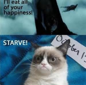 harry potter cat pin by v v on grumpy cat