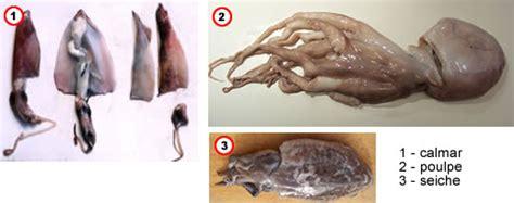 comment cuisiner la seiche comment préparer poulpes calmars et seiches