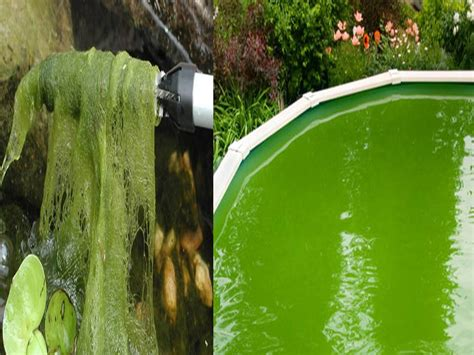 pond outlet blog blog archive  rid  algae
