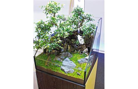 inspirational aquariums bonsai paludarium practical