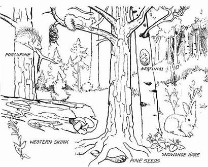 Forest Coloring Animals Pages Habitat Sketch Sky