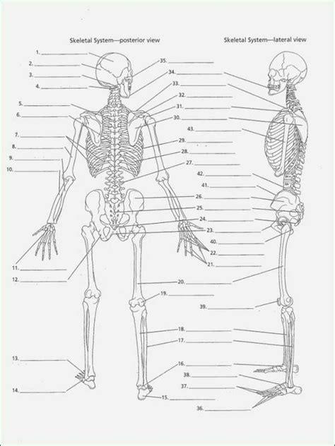 printable anatomy labeling worksheets inspirational