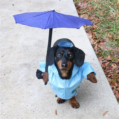 hunting dog costume  gun rain umbrella dog costume