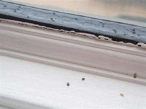 black bugs on window sill bugs on window sill pictures to pin on pinterest pinsdaddy