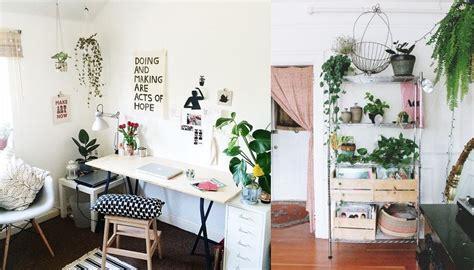 inspirasi indoor plant  praktis  rumah sempit