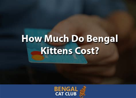 What Does A Cost by How Much Do Bengal Kittens Cost Bengal Cat Club