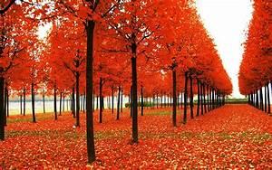 Wallpaper Fall Season (49+ images)  Fall