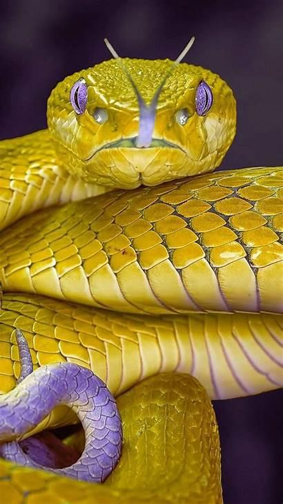 Zedge Snake Animals Golden Animal Wallpapers Snakes