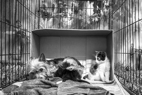 P Os By Robyn Arouty Show Stray Yorkie Caring For Two Kittens Daily Mail Online