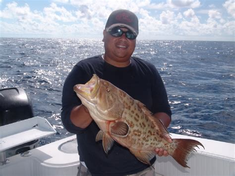 scamp grouper catches weekly 2009 fishing delphfishing