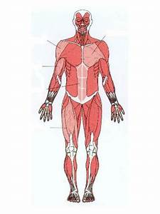 Label The Muscles By Damo3132 - Teaching Resources