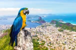 Rio De Janeiro Brazil Birds